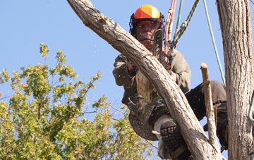 finding qualified Bessbrook tree surgeons