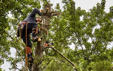 tree surgeon Bessbrook, Newry And Mourne