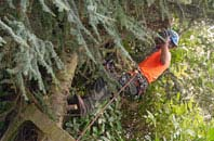 free Bessbrook tree surgery quotes